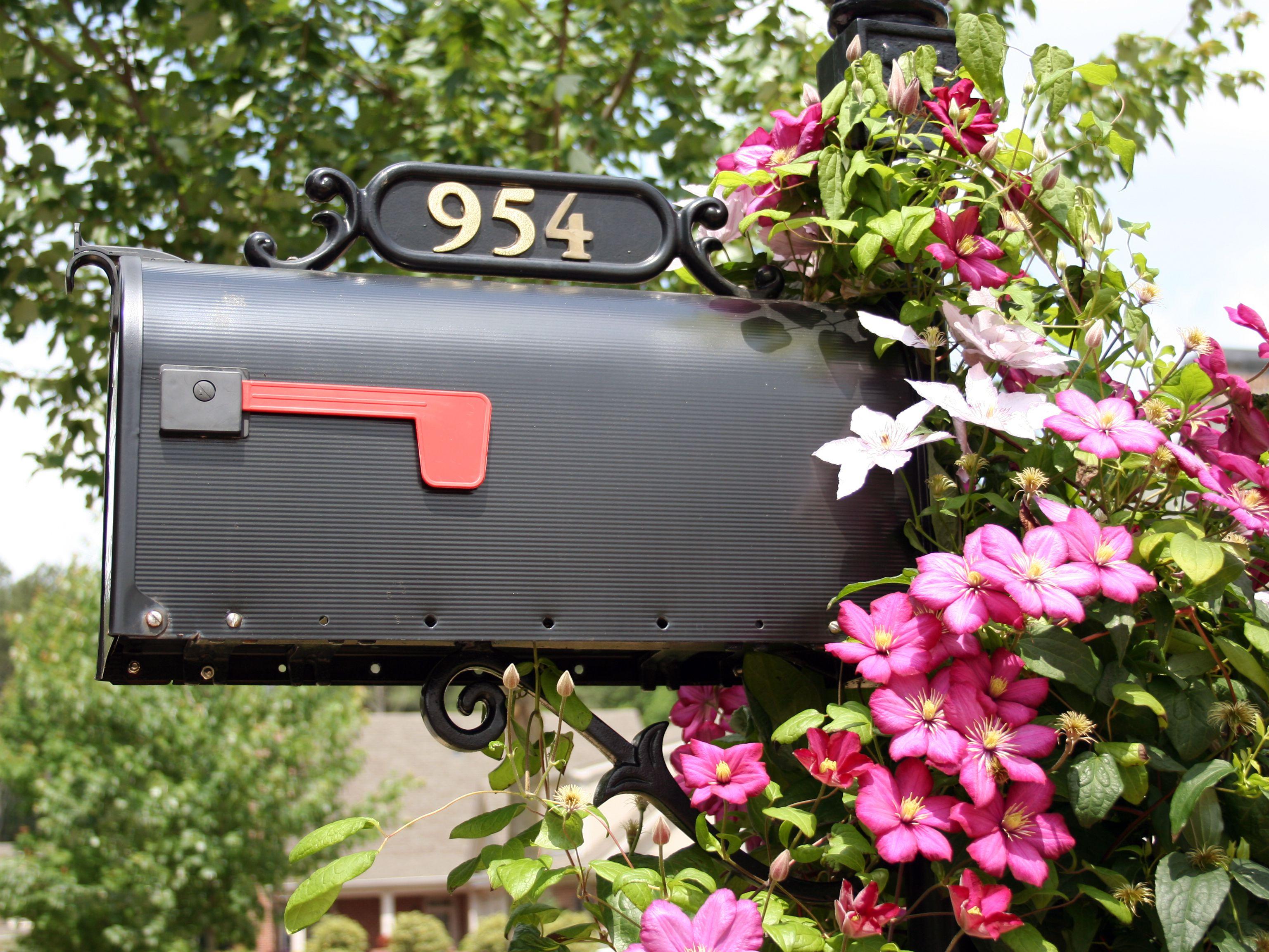 mailboxclematis-582b4fc65f9b58d5b14d0707